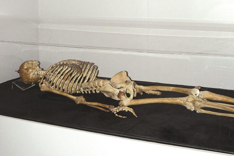 Esqueleto Joaquim